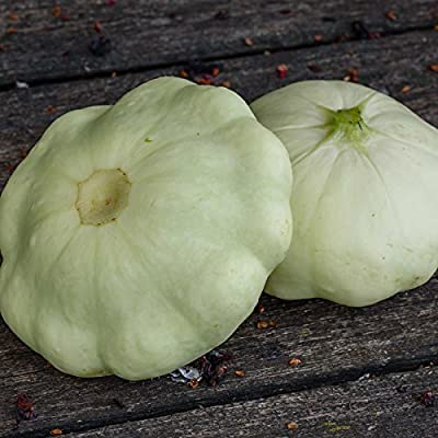 Early White Scallop Summer Squash Garden Seeds - Heirloom, Non-GMO - Vegetable Gardening Seed - Mountain Valley Seeds