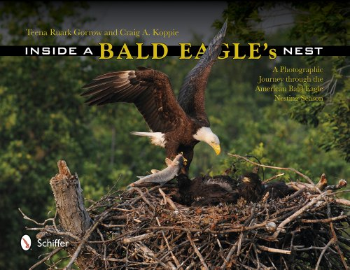 Inside a Bald Eagle's Nest: A Photographic Journey Through the American Bald Eagle Nesting ()