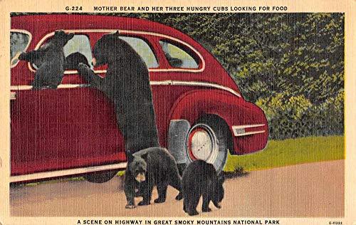 Smoky Mountains National Park Mother Bear and Cubs Linen Postcard J80712