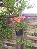 Pack of 15 Plant Pot Holder Bracket 7 inch, Super Save Free Delivery and Made in the Uk For Sale