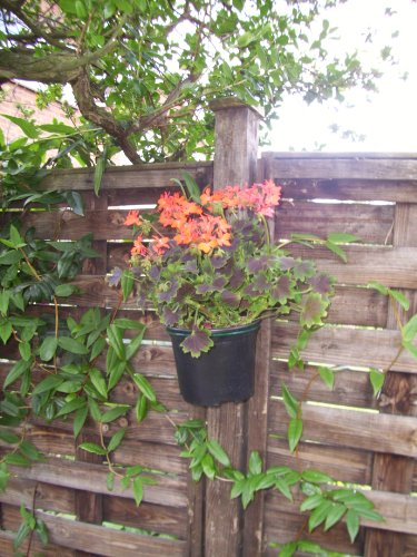 Pack of 15 Plant Pot Holder Bracket 7 inch, Super Save Free Delivery and Made in the Uk