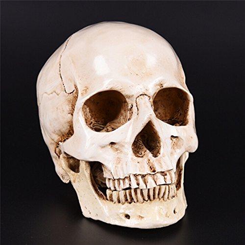 Statues & Sculptures - Skull Resin Replica Medical Model Lifesize 1 Halloween Home Decoration Decorative Craft - Plant Project Life Skull Lifesize Skull Shirt Figurine Skull Human Sculptur ()