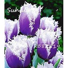 Rare tulip beautiful flower seeds 30seeds/bag tulip seeds (not tulip bulbs) diy home garden planting Flowers symbolizes love