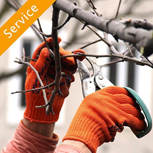 tree-trimming-or-pruning-commercial-3-trees