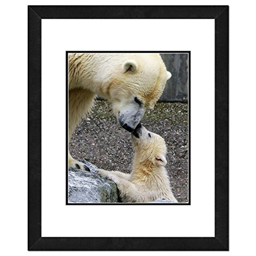 Polar Bears Photo (Artwork Bear Polar)