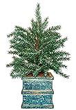 Cmas Tabletop Tree 14''