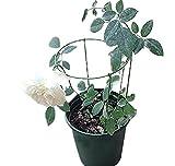 EcoTrellis Mini Garden Circle Trellis for Pot