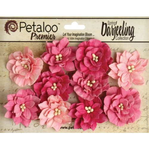 Petaloo-Darjeeling-Teastained-Dahlia-Flowers-Pink-10-Pack