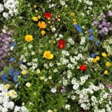 Seeds and Things 1,000 Plus Super Short Wildflower Mix of Seeds That Grow 10 Inches or Less , Great for Borders