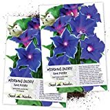 Seed Needs, Blue Picotee Morning Glory (Ipomoea Nil) Twin Pack of 70 Seeds Each Untreated