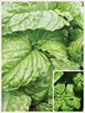 Homegrown Basil Seeds, 1000 Seeds, Organic Mammoth Basil