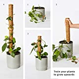 The Blooming Jungle 24 Inch Moss Pole - 2 Coco Coir
