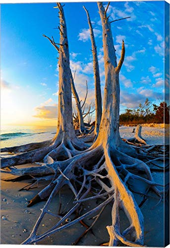 (Lovers Key State Park, Lee County, Florida by Panoramic Images Canvas Art Wall Picture, Gallery Wrap, 24 x 36 inches )