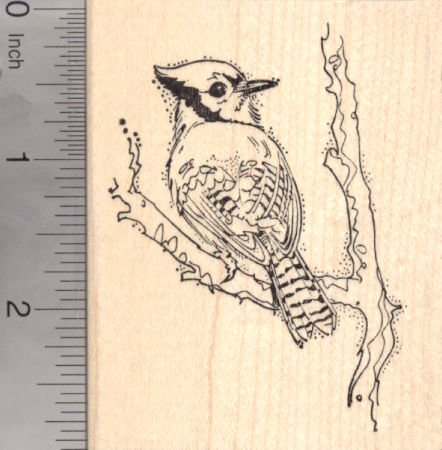 Anita/'s Blue Jay Bird On A Branch Wooden Rubber Stamp