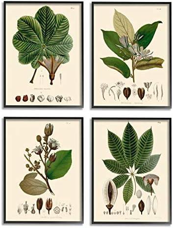 Stupell Industries Plant Anatomy Chart Vintage Scientific Illustration Unknown Artist Black Framed Wall Art 4pc Each 16 x 20