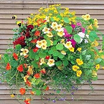 BloomGreen Co. Semillas Flor: Las Mejores Plantas para Las cestas Colgantes Enredaderas y trepadoras Plantas para Jardín Jardín Ollas [Home Garden Semillas Eco Pack] Semillas de la Planta: Amazon.es: Jardín