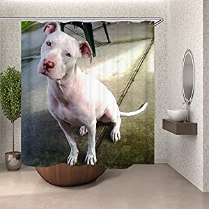 SARA NELL Bathroom Shower Curtain American Pitbull Terrier White White Pit-Bull Shower Curtains Durable Fabric Bath Curtain Waterproof Bathroom Curtain with 12 Hooks(72 L by 72 W inches) 1