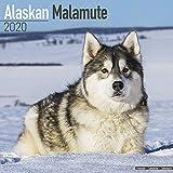 Alaskan Malamute Calendar - Dog Breed Calendars
