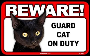 Cat Alerts Woman of Intruder