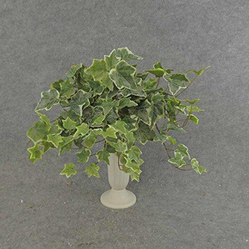 english ivy bush - 4