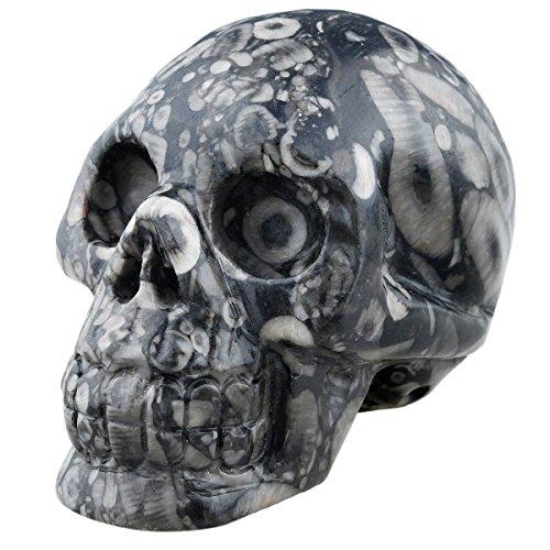 "rockcloud Healing Crystal Stone Human Reiki Skull Figurine Statue Sculptures Black Crinoid Fossil 3"""