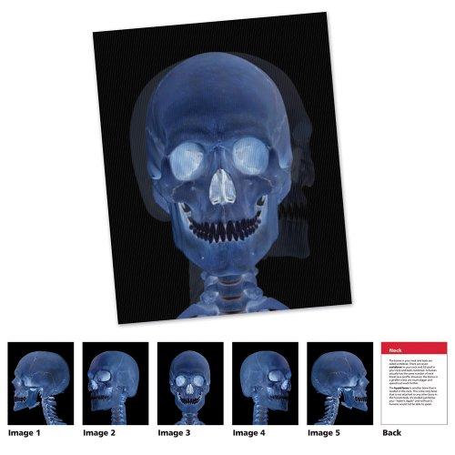 Learning Resources New View Science Human Body Card Set ()