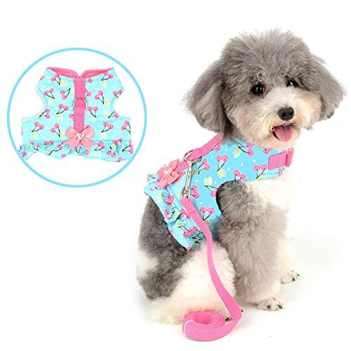 Bestselling Small Animal Collars