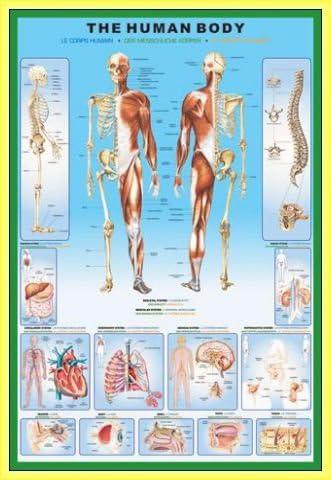 - Anatomie 91 x 61cm MDF 1art1 Le Corps Humain Poster et Cadre