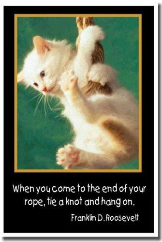 sand cat litter