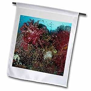 Danita Delimont - Marine Life - Indonesia, Papua, Raja Ampat, Marine Life, Reefs-AS11 BJA0039 - Janyes Gallery - 12 x 18 inch Garden Flag (fl_73250_1)