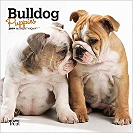 Bulldog Puppies 2019 Mini Wall Calendar: Amazon co uk