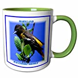 3dRose Florene State Birds - Maryland State Bird Baltimore Oriole - 11oz Two-Tone Green Mug (mug_50906_7)