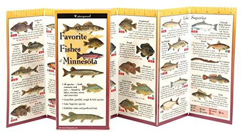 Favorite Fishes of Minnesota (Foldingguides)
