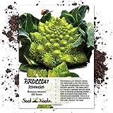 Seed Needs, Romanesco Broccoli (Brassica oleracea) 350 Seeds Non-GMO