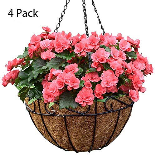 Amagabeli 4 Pack Metal Hanging Planter Basket With Coco Coir Liner 14 Inch Round Wire Plant Holder With Chain Porch Decor Flower Pots Hanger Garden Decoration Indoor Outdoor Watering Hanging Baskets by AMAGABELI GARDEN & HOME