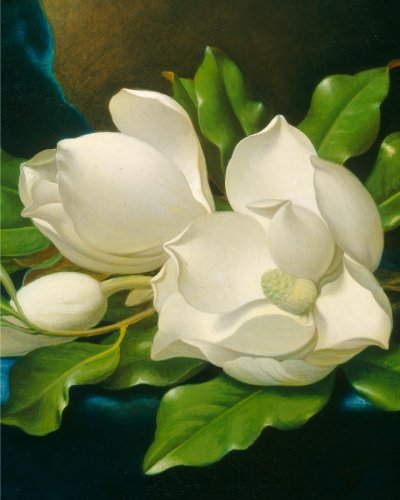 Giant Magnolias on a Blue Velvet Cloth: Notebook - Giant Magnolias