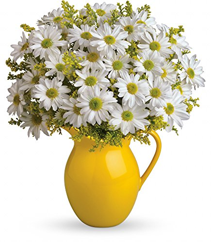 Chicago Flower Co. - Sunny Day Pitcher of Daisies - Fresh and Hand Delivered by Chicago Flower Company