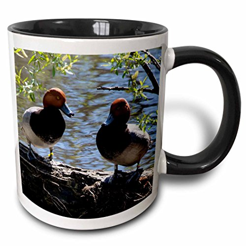 3dRose Roni Chastain Animals - Tow Red headed ducks - 15oz Two-Tone Black Mug (mug_113817_9)