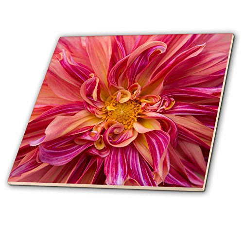 3dRose Danita Delimont - Flowers - USA, Oregon, Canby. Pink dahlia detail. - 6 Inch Glass Tile - Canby Glass