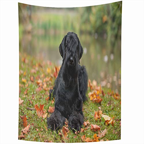 Ahawoso Tapestry 60x90 Inch Purebred Green Action Giant Schnauzer Breed Dog Lying On Autumn Leaves Maple Big Design Wall Hanging Home Decor for Living Room Bedroom Dorm