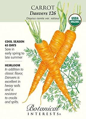 'Danvers 126' Carrot Seeds - 1 gram - Organic
