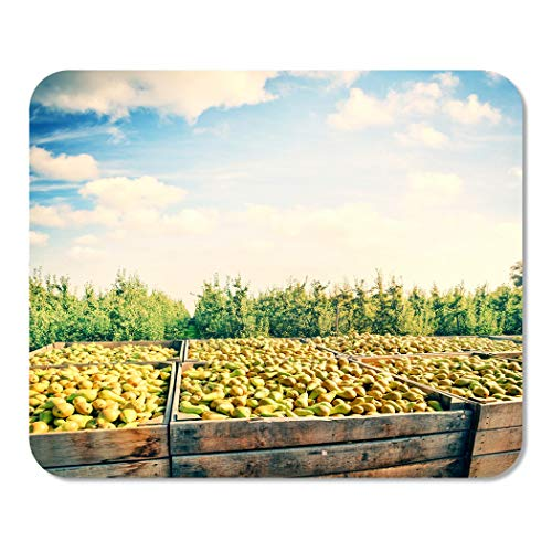 Suike Mousepad Computer Notepad Office Blue Fruit Freshly Harvested Pears in Wooden Crates Green Home School Game Player Computer Worker 9.5x7.9 Inch