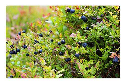 (Tree26 Indoor Floor Rug/Mat (23.6 x 15.7 Inch) - Blueberries Heather Blueberry Plant Blue Food)