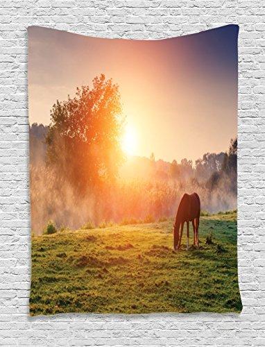 Arabian Horses Images - 3