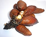 Details about Thai Salacca / Zalacca / Salak / Snake Fruit Seeds Rare, Very Hard to find