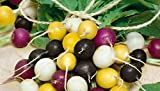 HEIRLOOM NON GMO Halloween Radish Mix 500 Seeds