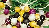 HEIRLOOM NON GMO Halloween Radish Mix 500 Seeds