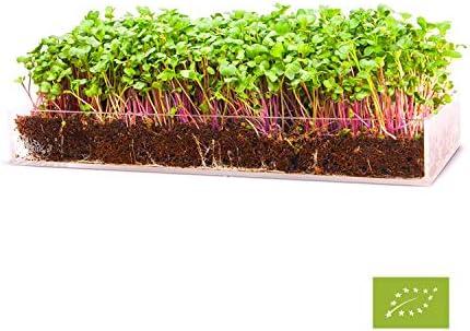 Garden Pocket Bandeja Large Brotes Germinados Bandeja Sustrato de ...