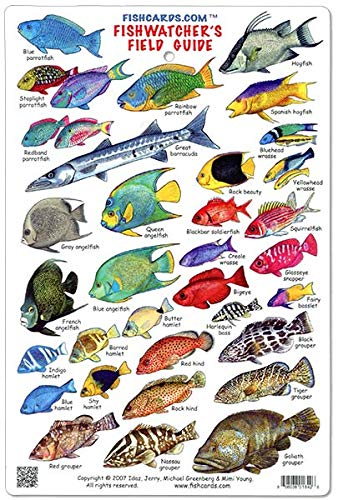 - Fishwatchers Reef Field Guide: Fishes of Tropical Atlantic & Caribbean ID Card