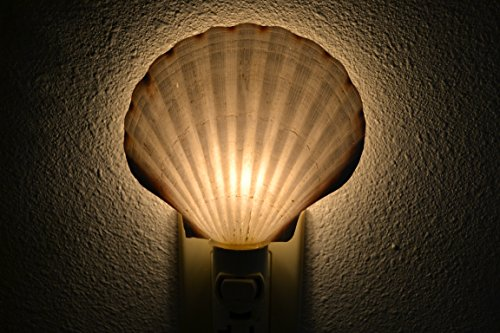 Scallop Sea Shell Nautical Beach Decor Nightlight
